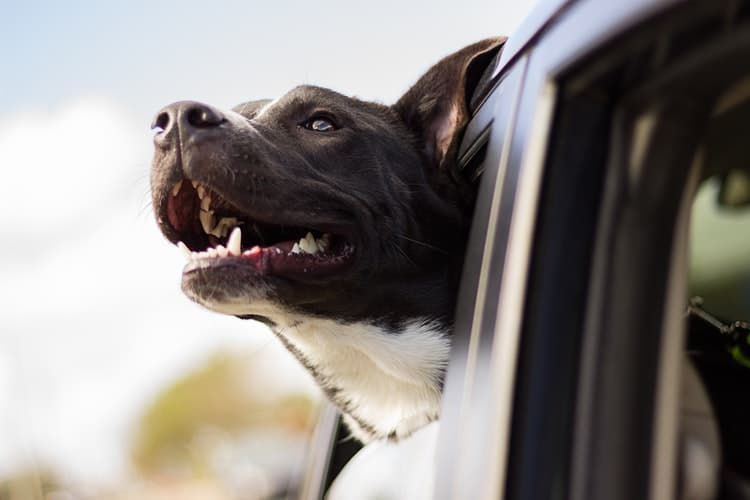 Know About Puppy Travel