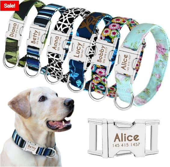 Durable Cool Puppy Collars You Can Buy Today