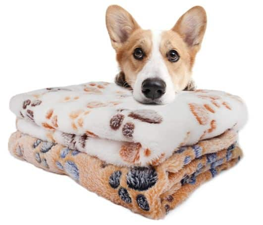 Awesome Puppy Products That Keeps Them Comfortable
