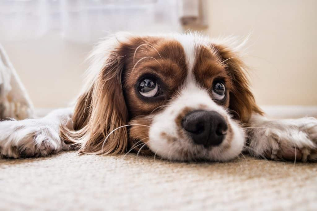 Five Best Dogs For Kids And Families