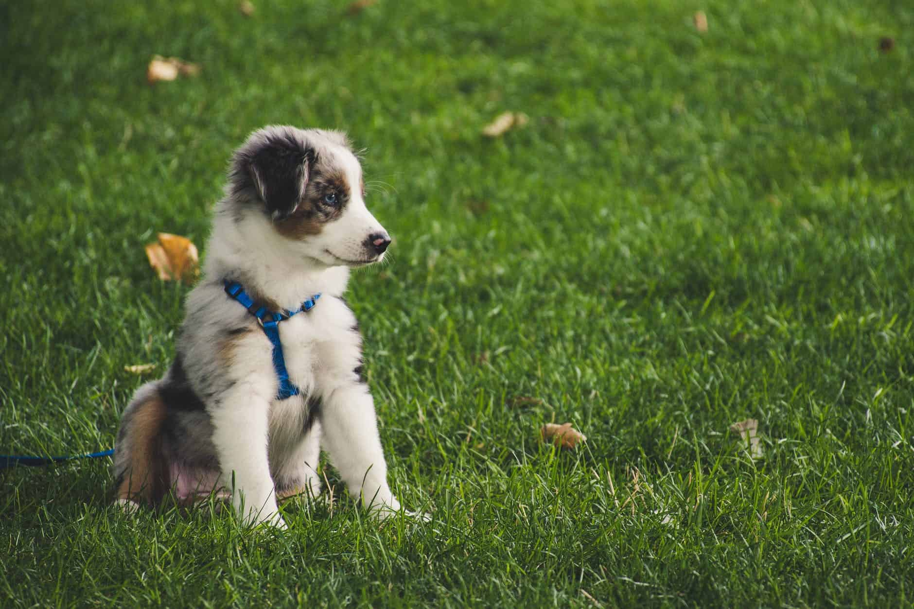 Leash Harness And Other Pet Care Products You Should Know