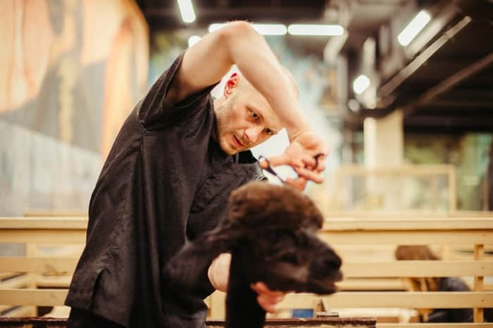 Dog Grooming: The Best Way to Groom Your Dog