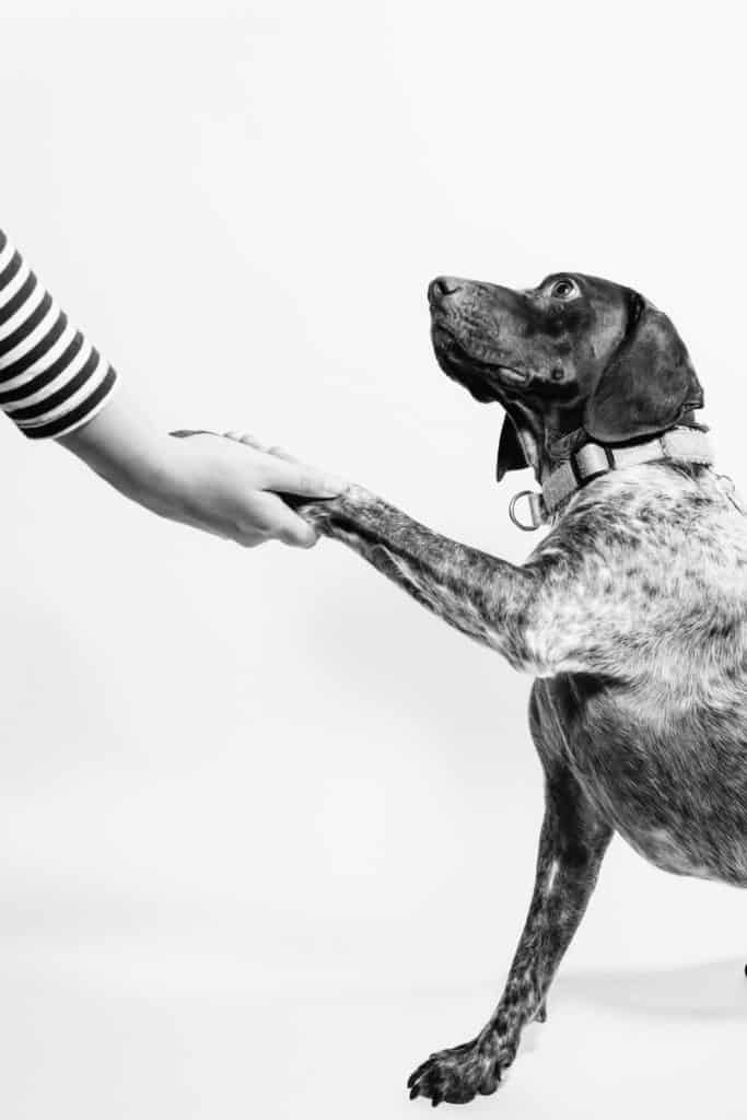 Dog Wound Care: Amazing Tips To Take Care Of Pet