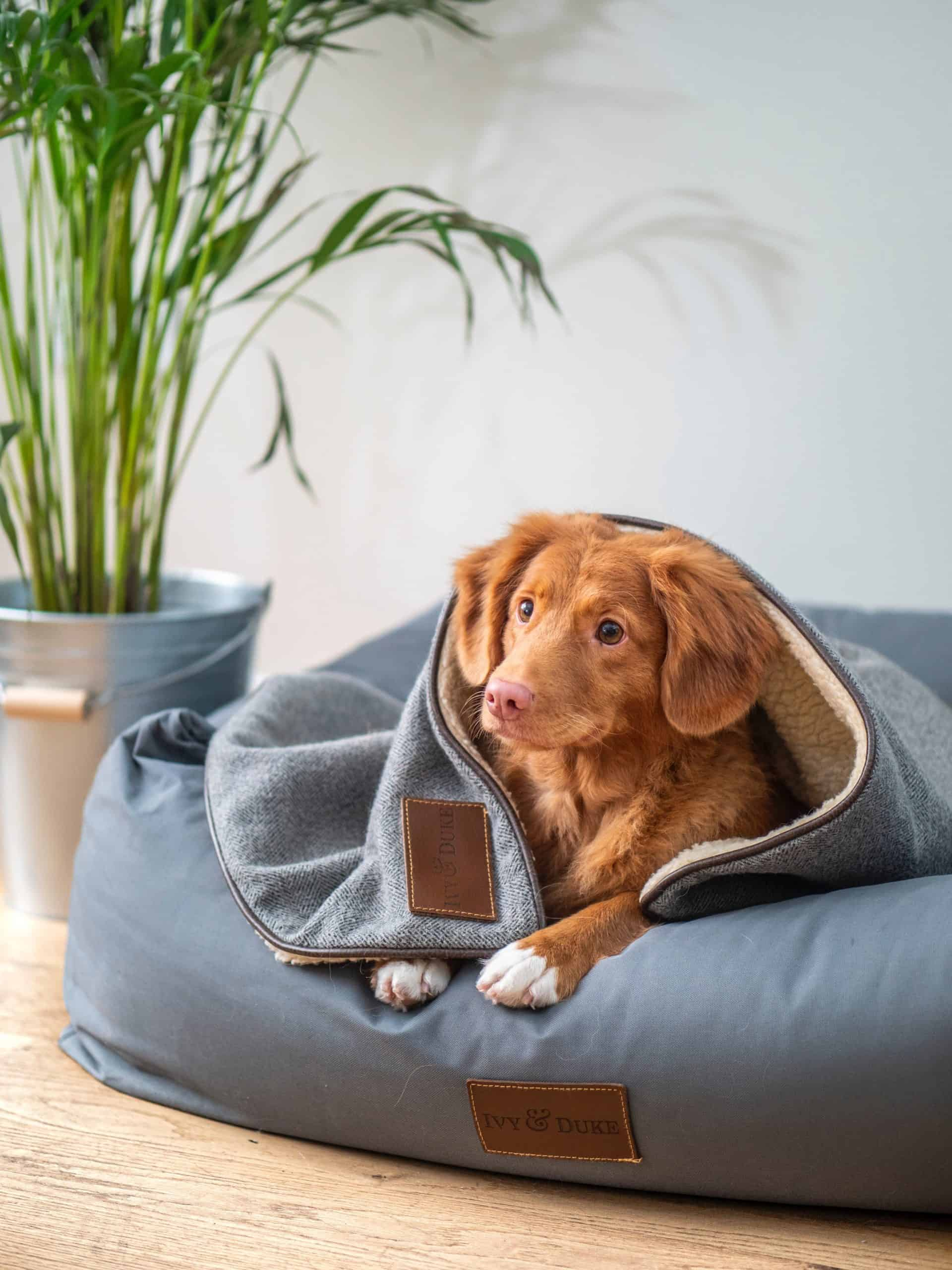 Taking Care Of A Puppy Tips: The Best Ways to Take Care