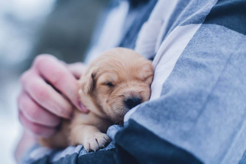 The Importance Of Puppy Care And Vaccine Schedules