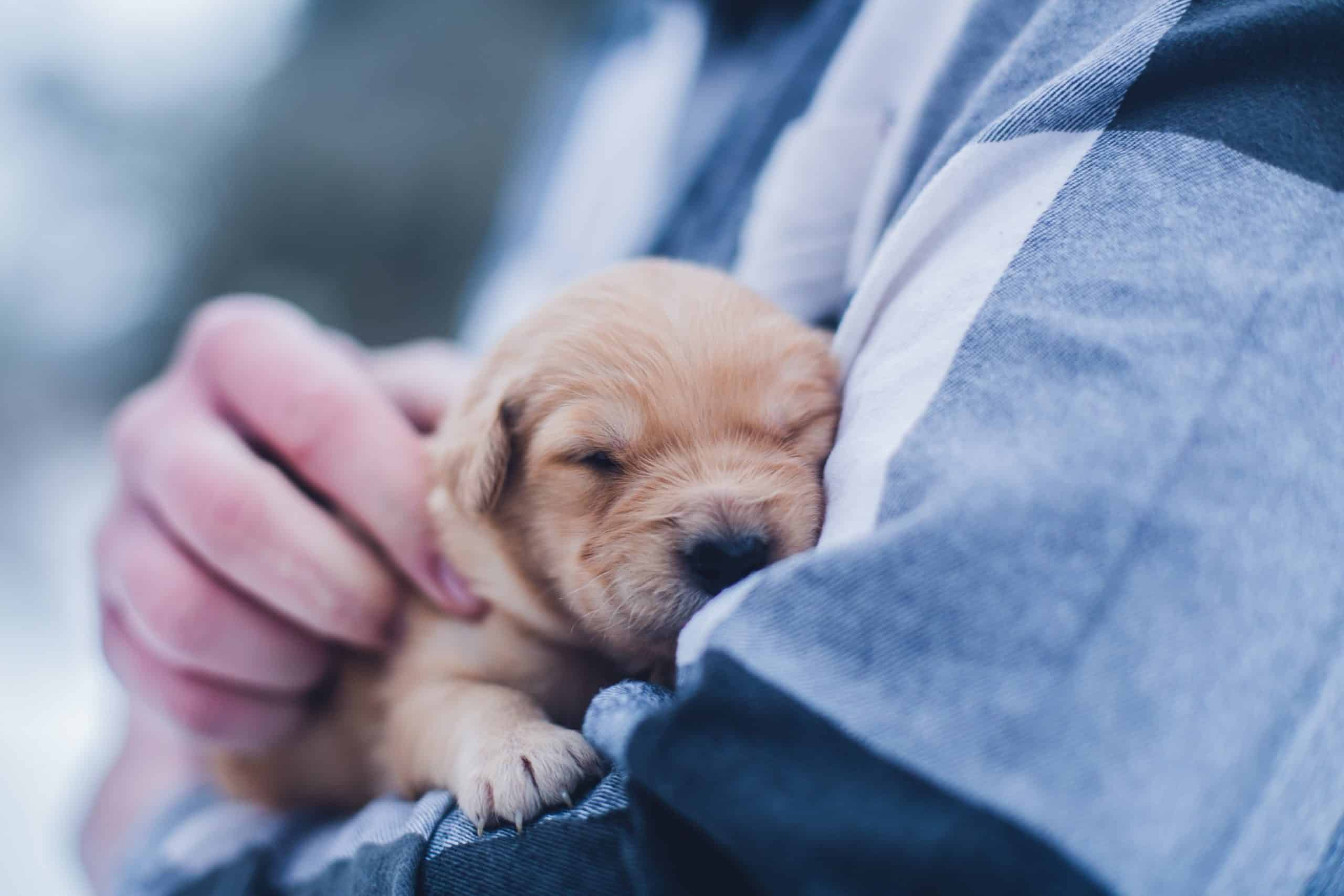 Puppy Care - The Importance Of Puppy Vaccine Schedules