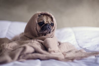 Reasons For Dog Overnight Care
