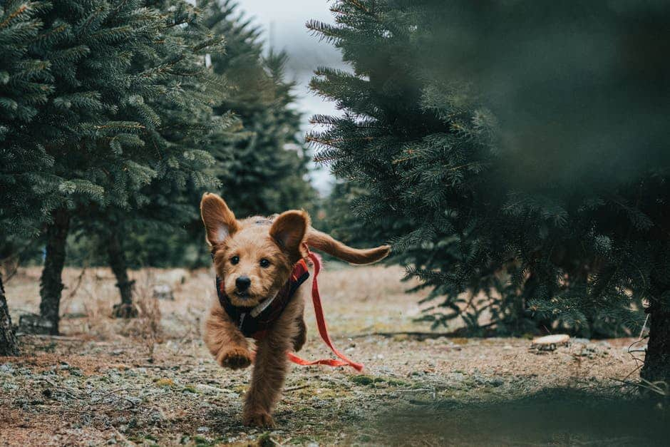 A dog running in the forest