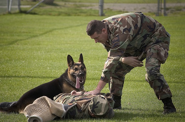 military dog accessories