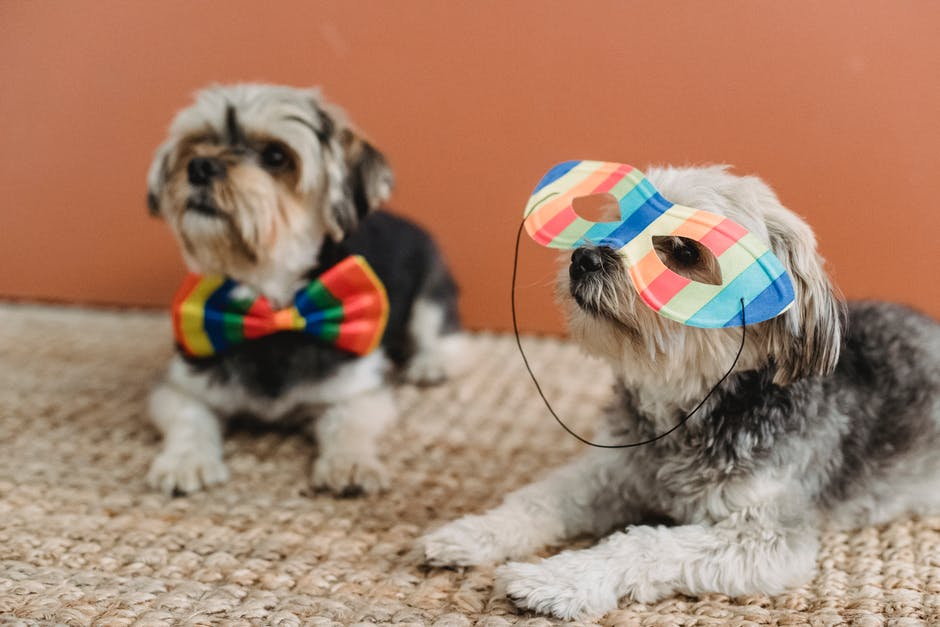 A small dog playing with a toy