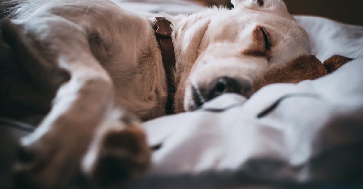 A close up of a dog lying on a bed