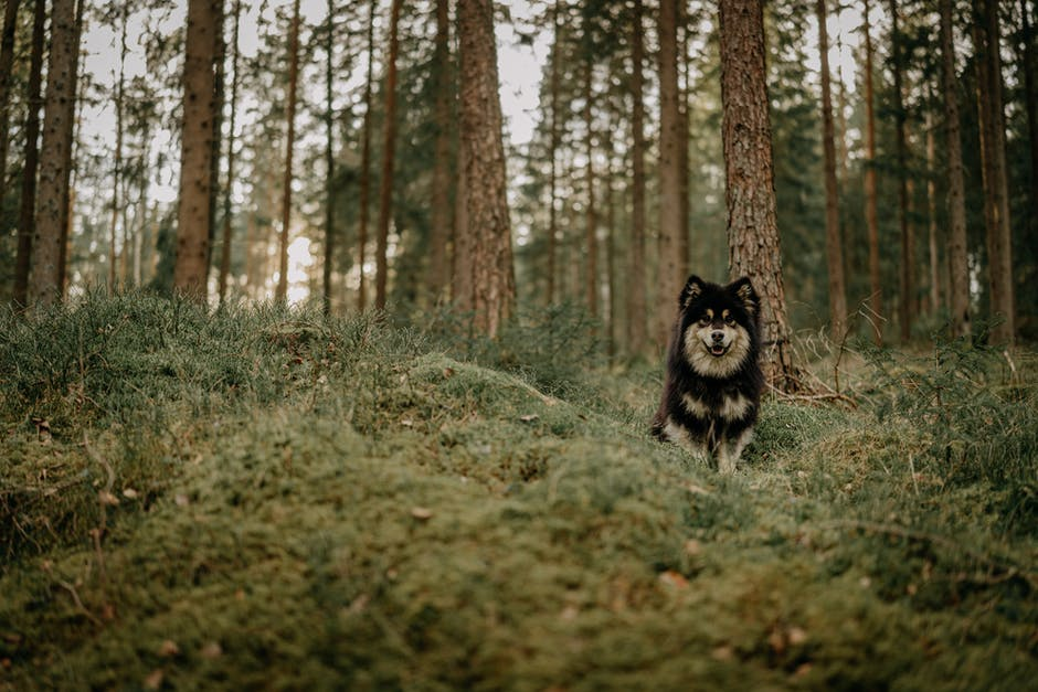 A cat is sitting in the middle of a forest